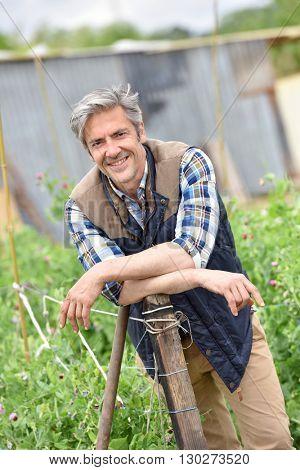 Cheerful farmer standing in vegetable garden