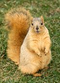 Cute Squirrel Standing
