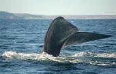 Whale Tail Tauchen