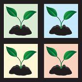 Four plants