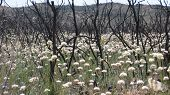 Post-fire vegetation