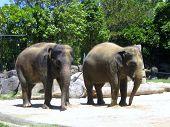 Cheeky Elephants