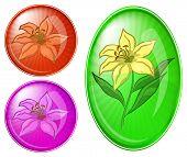 Lirio de flores, botones