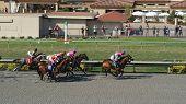 Horse Racing, Del Mar