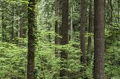 Forest Trunks Woods Environment Wildlife  Green Nature poster
