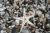 Starfish Shell On Beach In Sunlight, Seascape. Live Action Of Starfish On Seacoast In Sunny Day. Sta poster