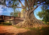 Ancient Tree With Exposed Roots Next To An Ancient Temple In Sukhothai, Thailand. poster