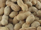 Peanuts Close Up