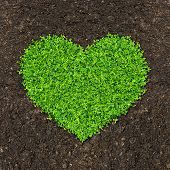 grass and green plants growing a heart shape