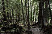 Forest Woods Green Vegetation Pine Moss Alaska poster