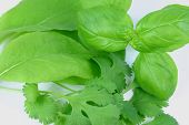 Fresh Herbs Closeup