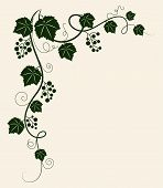 Grape vine silhouette. Vector illustration.
