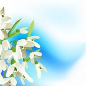 Blue spring background with snowdrops