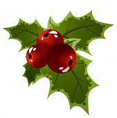 pic of holly  - Holly berry isolated on white background - JPG
