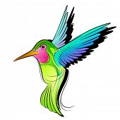 Colourful Hummingbird vector illustration.