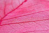 Closeup Of Dried Red Leaf