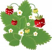 Strawberry And Dice