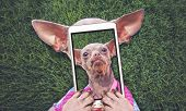 cute chihuahua laying in the grass during summer taking a selfie toned with a retro vintage instagra poster