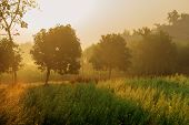 Sun Rises In The Background, Sunrays Falling Over A Green Agriculture Field. Rural Indian Scene. Nat poster