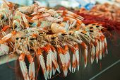 Langoustines At Fish Market
