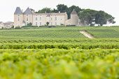 vineyard and Chateau d'Yquem, Sauternes Region, France