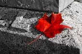 Red leaf on grave stone in fall.