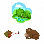 Vector Illustration Of Frog And Anuran Symbol. Collection Of Frog And Animal Vector Icon For Stock. poster