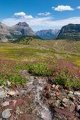 Wild Flowers And Mountain Meadows Along The Hidden Pass Trail In Logan Pass Area Of Glacier National poster