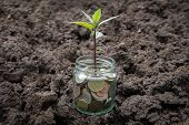 Coins In Glass Jar With Little Plant Growing On Money - Finance Growth, Saving And Investment Money  poster