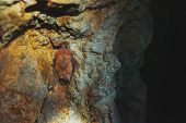 A Brown Bat Hangs Upside Down In A Cave. Night Predators In The Wild poster