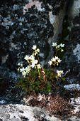Plants In The Sermermiut Valley Near Ilulissat