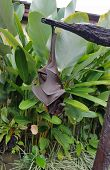 Large Fruit Bat Or Flying Fox Hanging Upside-down In A Tree In Bali, Indonesia poster