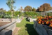 Community gardens.