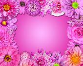 Quadro de flor-de-rosa, roxo flores