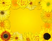 Flower Frame With Yellow Flowers On Orange Background