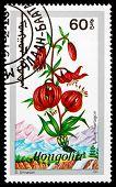 Postage Stamp Mongolia 1991 Martagon, Flowering Plant