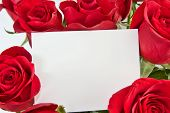 Roses And Blank Card