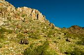 stock photo of piestewa  - Beautiful Piestewa  - JPG