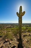 Backlit Cactus