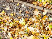 foto of leaf-blower  - wind clear urban pavement from autumn leaves - JPG