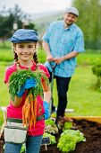 stock photo of cultivation  - Gardening - JPG