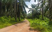 Palm Oil Plantation In Johor, Malaysia.