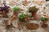 Decorative Potted Plants On A Stone Wall