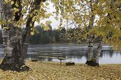 Autumn By Pend Oreille River.