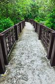 Walkway In The Mangrove Forest
