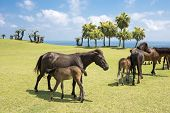 stock photo of lactating  - Lactating wild mare with foal in seashore - JPG