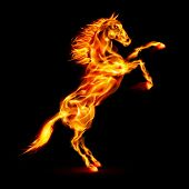 Fire horse rearing up.