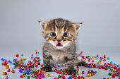 Little Surprised Funny Kitten With Small Metal Jingle Bells Beads