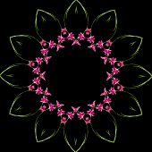Frame Pattern of Bright Orchid plant isolated on black background