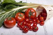 Tomato Surround Chard